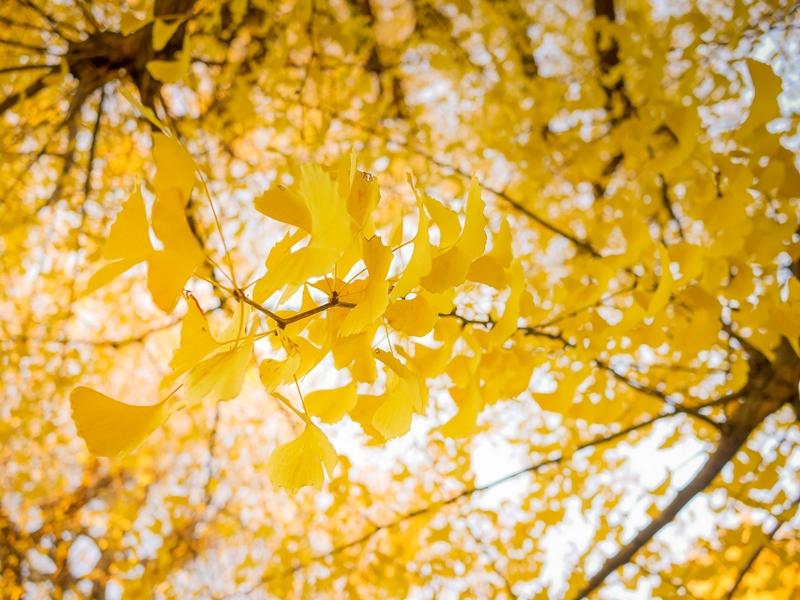 160927_fragrance_coordinate_autumn_winter01