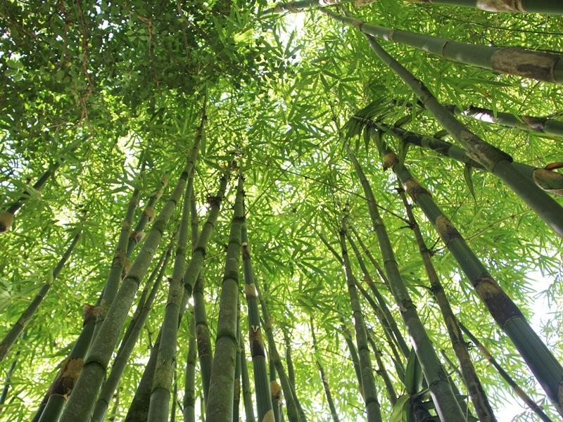 180327_golden_bamboo_april_fragrance_coordinate02